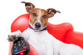 Dog tv  — Stock Photo