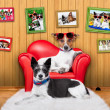 Love couple sofa dogs — Stock Photo #51460781