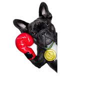 Active sport dog — Stockfoto