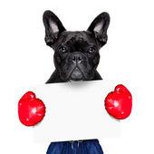 Cão desporto ativo — Fotografia Stock