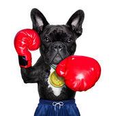 Aktif spor köpek — Stok fotoğraf
