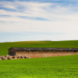 Old Stone Barn — Stock Photo