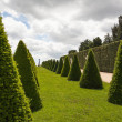 Parterre or conical hedges from Versailles Chateau — Stock Photo #13960521