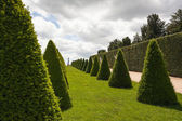 Parterre or conical hedges from Versailles Chateau — Stock Photo