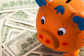 The funny piggy bank — Stock Photo