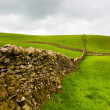 On the pasture in Yorkshire Dales National Park — Stock Photo