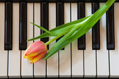 Music and flowers — Stock Photo