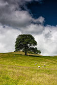 On the pasture in Sedbergh — Stock Photo