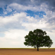 Lonely tree on empty field — Stock Photo #26790543