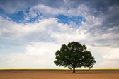 Lonely tree on the empty field — Stock Photo