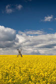 Hunting tower on the rape field — Stock Photo