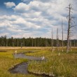 Dead forest in Yellowstone National Park — Stock Photo