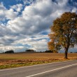 Autumn scenery near a empty road — Stock Photo