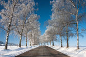 Winter road in sunny day — Stock Photo