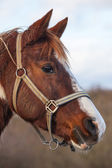 Detail of race horse — Stock Photo