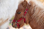 Detail of brawn young horse — Stock Photo