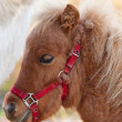 Stock Photo: Detail of brawn young horse