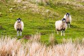 约克郡山谷国家公园 (大不列颠在草地上) — 图库照片