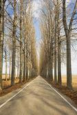 Avenue in winter — Stock Photo