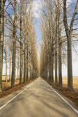 Avenue in winter — Stock Photo