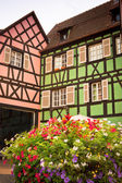 Houses in pink and green — Stock Photo
