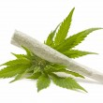 Hemp (cannabis) — Stock Photo
