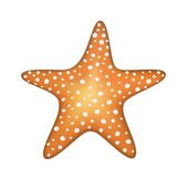 Sea star — Stock Vector