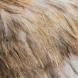 Stock Photo: Plumage