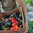 Harvesting of vegetables — Stock Photo #12445501
