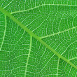 Green leaf , detail — Stock Photo