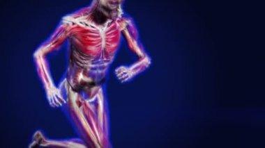 Anatomy Run — Stock Video