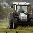 Stock Video: Tractor cutting grass surrounded by crows and jackdaws.