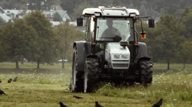 Tractor cutting grass surrounded by crows and jackdaws. — Stock Video