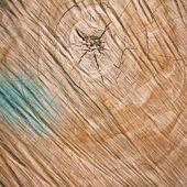 切木背景 — 图库照片