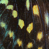 Butterfly wing texture — Foto Stock