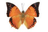 Papillon sur fond blanc — Photo