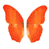 Butterfly wings on white background — Stock Photo