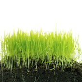 трава с почвой — Стоковое фото