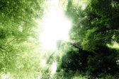 梦想森林 — 图库照片