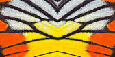 Butterfly wing texture — Photo