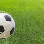 Soccer ball in a net. — Stock Photo