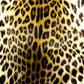 ヒョウ皮膚の質感 — ストック写真