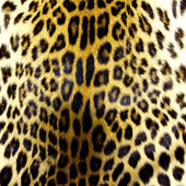 Leopar deri dokusu — Stok fotoğraf