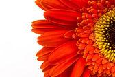 Rode bloem achtergrond — Stockfoto