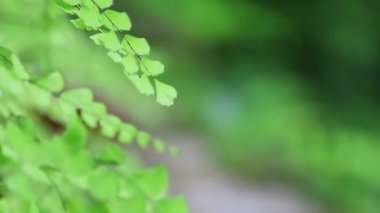 Fern in breeze, nature green background — Stock Video