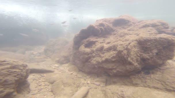 Hermosos peces bajo el agua — Vídeo de stock