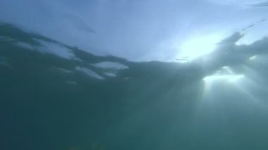 HD underwater footage of HD, beautiful fish underwater with sunray — Stock Video