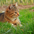 Cute little kitten playing on the grass close up — Stock Photo