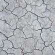 Cracks on dry earth — Stockfoto