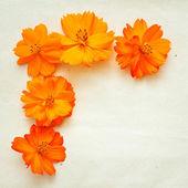 Orange flowers on paper background — Stock Photo
